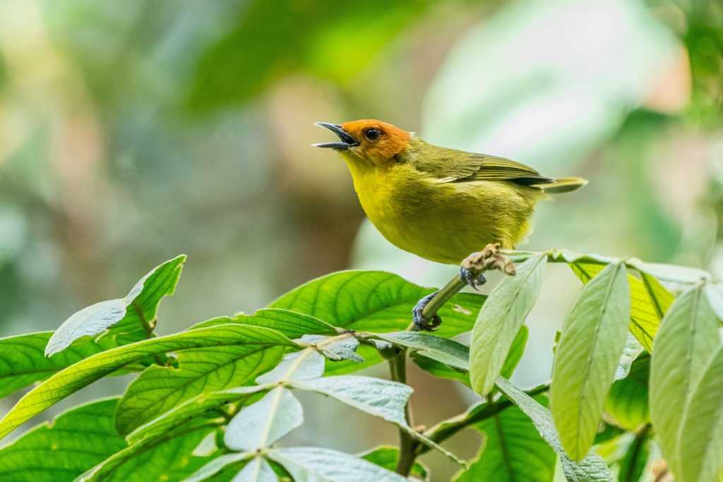yellow bird perching on green leaf tree during daytime